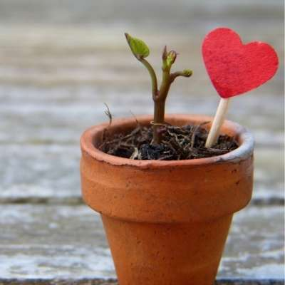 Heart in flower pot